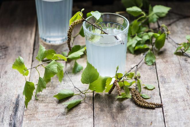 Sok z brzozy, czyli oskoła: jak pozyskać i stosować sok z brzozy? [WIDEO]