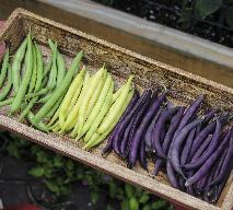 Zielona i fioletowa fasolka szparagowa - jak gotować fasolkę, aby nie straciła koloru?